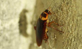 Pest Control Blue Mountains