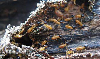 Pest Control Northern Suburbs