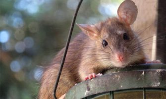 Pest Control Wahroonga