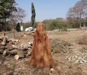 termite-hill-238382_1920